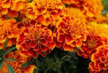 Photo of 5цветов, которые стоит посадить насвоем участке