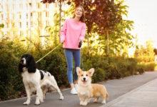 Photo of Эксперты рассказали, каквыгуливать собак впериод пандемии