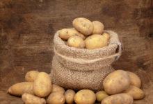 Photo of Какизгнать сучастка колорадских жуков исохранить урожай картофеля