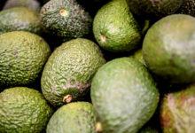 Photo of Назван уничтожающий холестерин ворганизме продукт