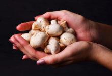 Photo of Какзанеделю вырастить надаче много грибов
