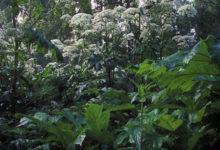 Photo of Врач назвала самые опасные длядетей растения вМоскве иПодмосковье