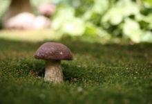 Photo of Медики перечислили полезные свойства грибов