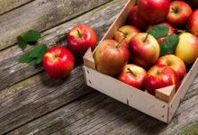 Photo of Врачи рассказали, кому нельзя есть яблоки