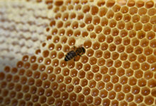 Photo of Россиянам рассказали обопасности меда