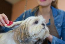 Photo of Хозяйка показала, делать сшерстью линяющей собаки